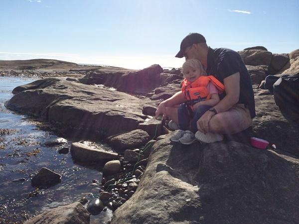 camping, varberg, apelviken, meta krabba